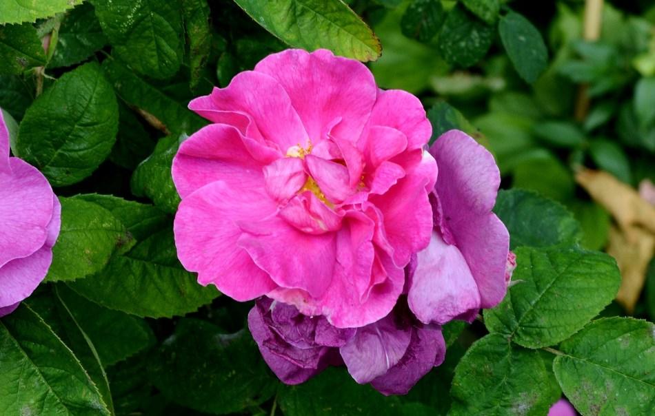 Geffrye Museum - Flower