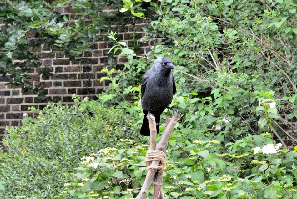 Kenwood House Rook