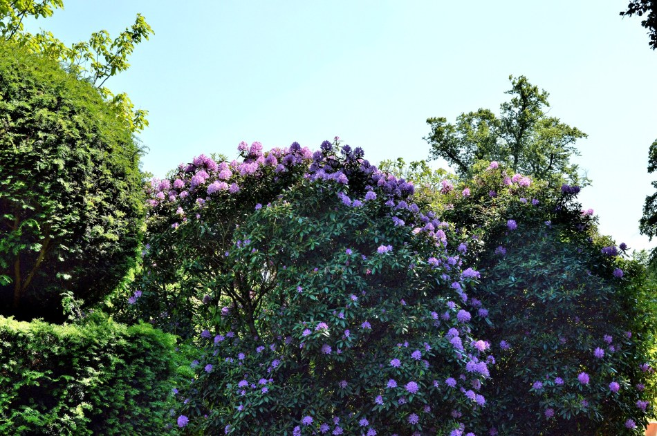 Osterley Park Gardens - 5