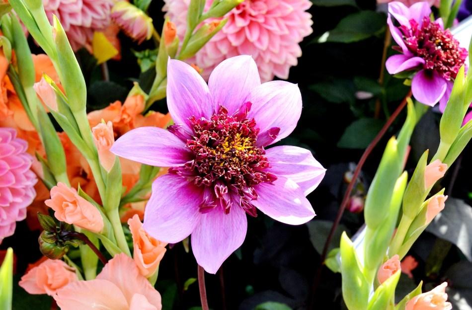 Flower 2 Wisley