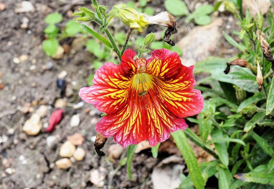 Hatfield House,Flower