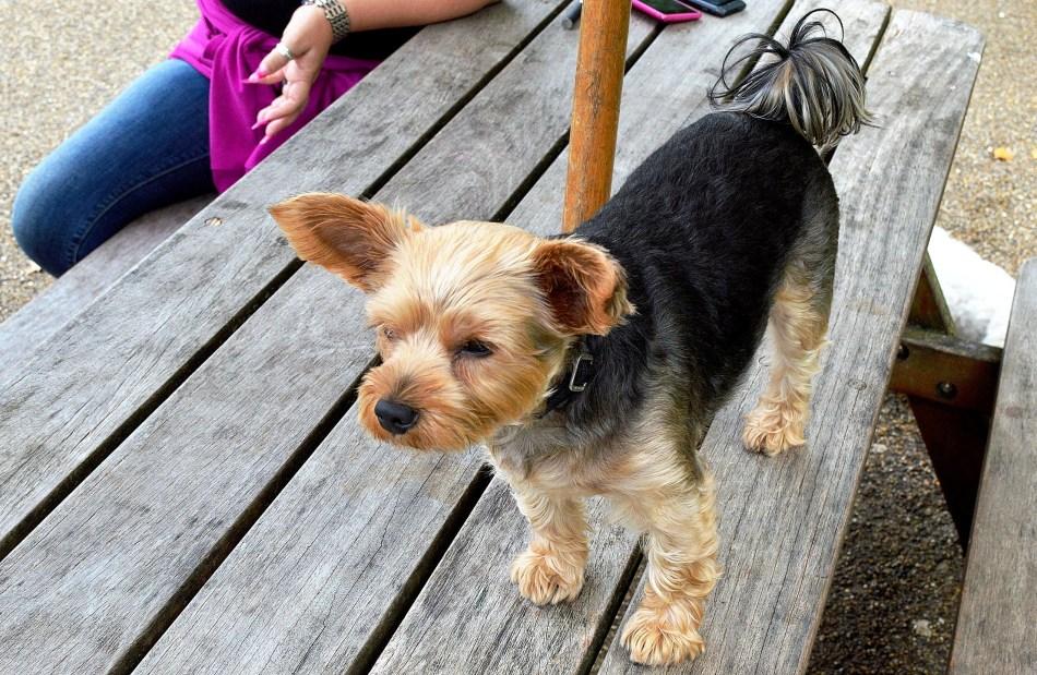Puppy DSC_4626