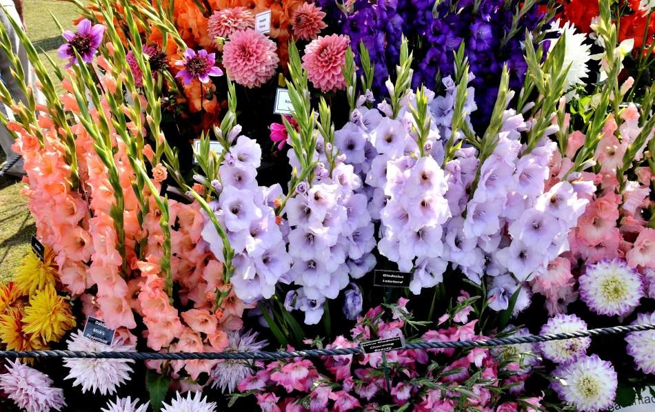 Wisley Flower Festival DSC_0159
