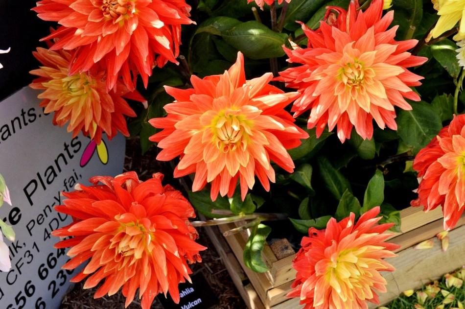 Wisley Flower Festival DSC_0173