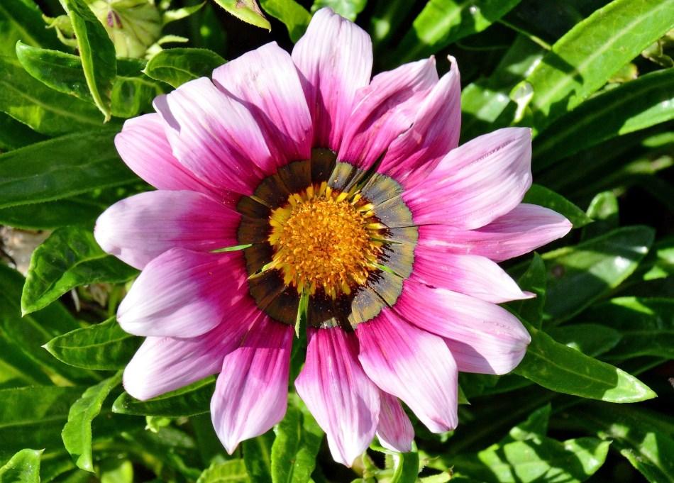 Bekonscot Flowers DSC_9835