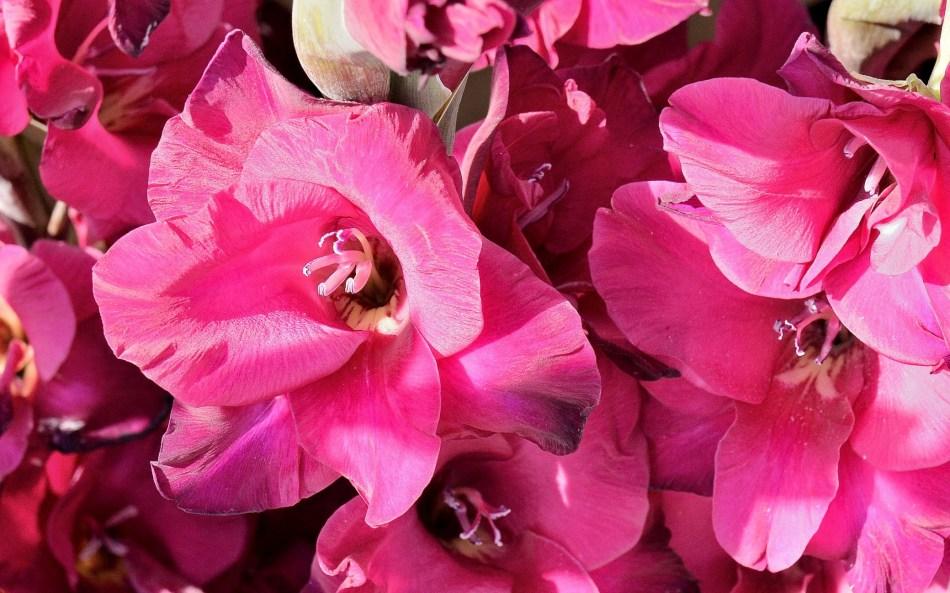 Wisley Flowers DSC_0175
