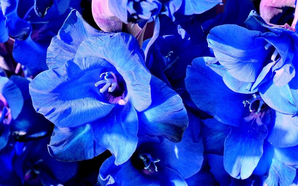 Wisley Flowers DSC_0175b