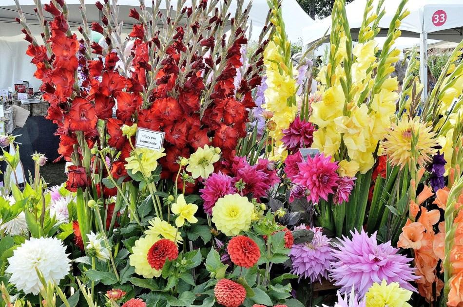 Wisley Flowers DSC_0290