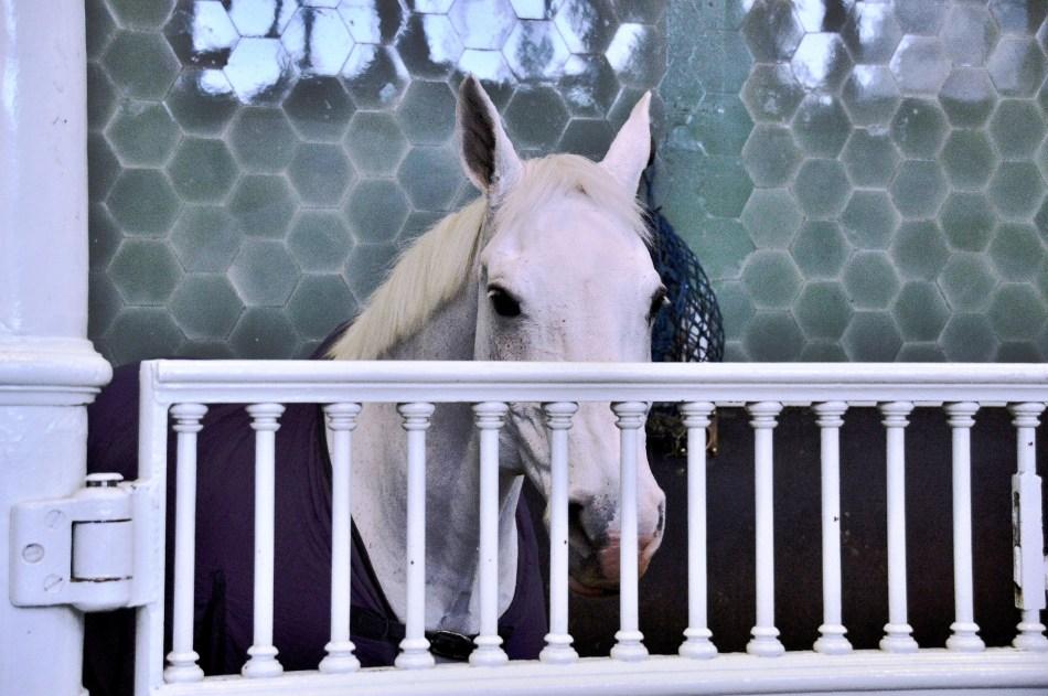 Horse at Royal Mews