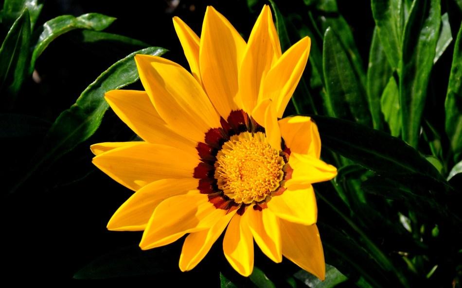 Bekonscot Flowers DSC_9836