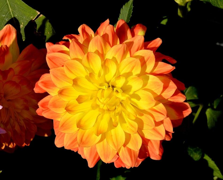 Wisley Flowers DSC_0172