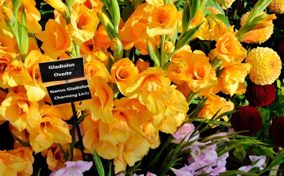 Wisley Flowers DSC_0279