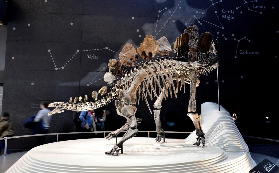 Dinosaur at the Natural History Museum