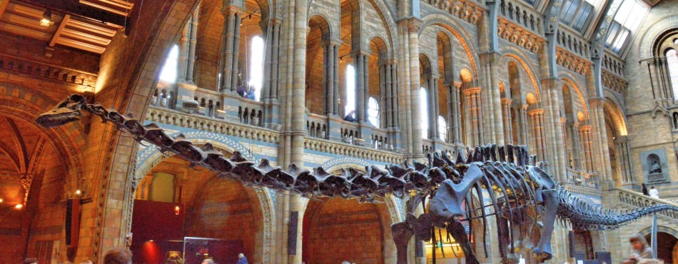 Diplodocus at the Natural History Museum