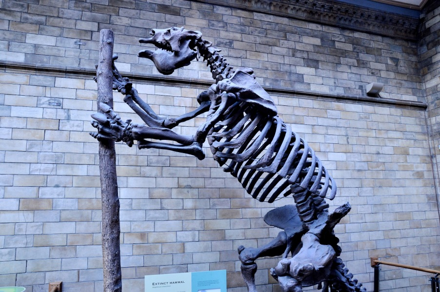 Megatherium Americanum Extinct Mammal at the Natural History Museum