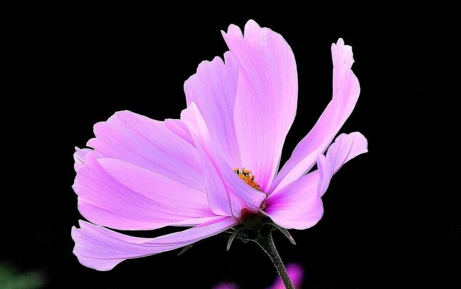 Horniman Flowers DSC_4057