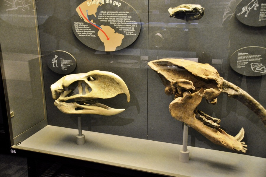 Killer Bird and Pseudo-elephant skulls at the Natural History Museum