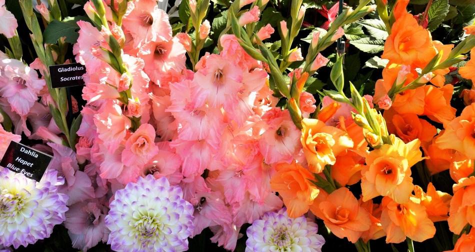 Wisley Flowers DSC_0162