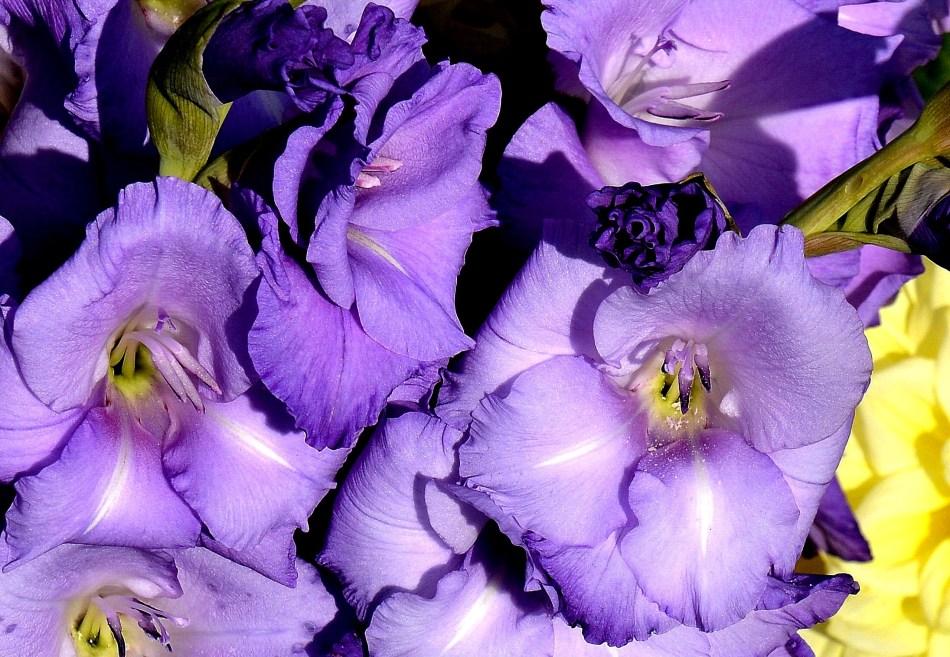 Wisley Flowers DSC_0166