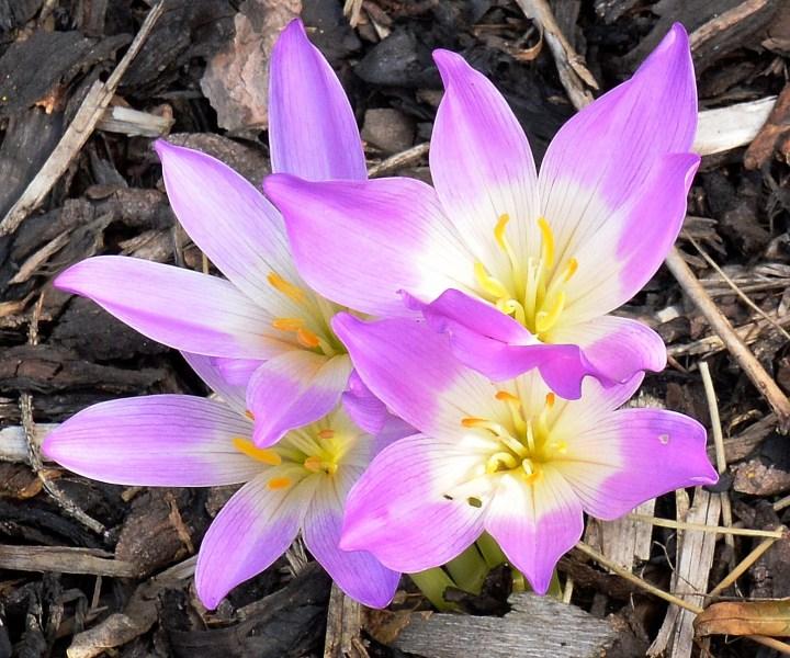 Wisley Flowers DSC_0121