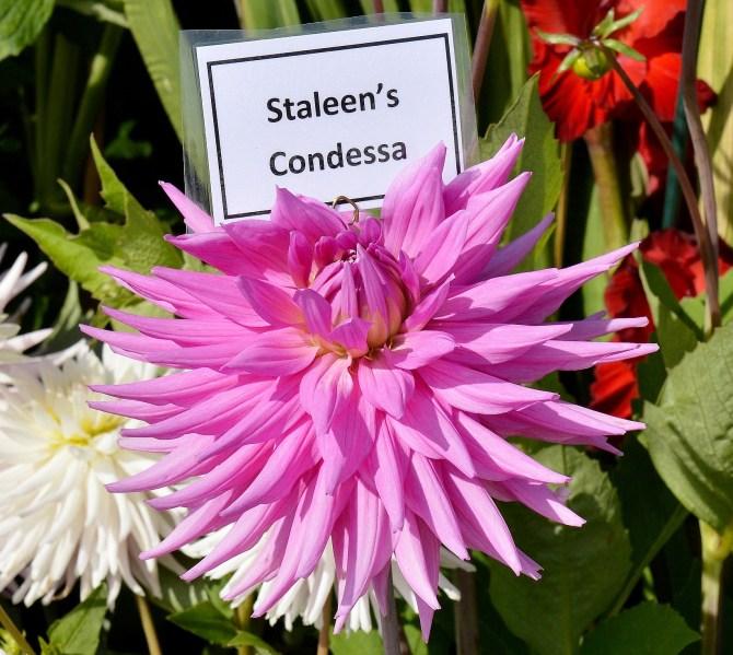 Wisley Flowers DSC_0170