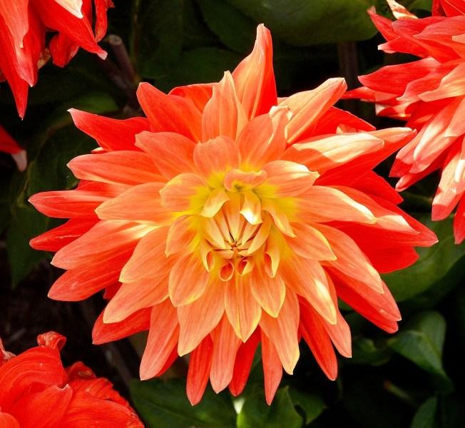 Wisley Flowers DSC_0174