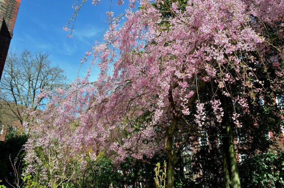 Burgh House Blossom