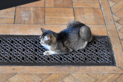 Southwark Cathedral Cat