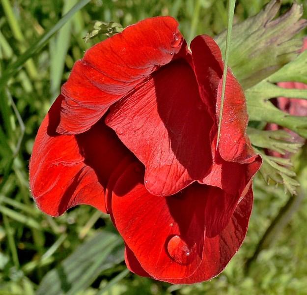 Tower Hamlets Cemetery Park Flowers DSC_3193