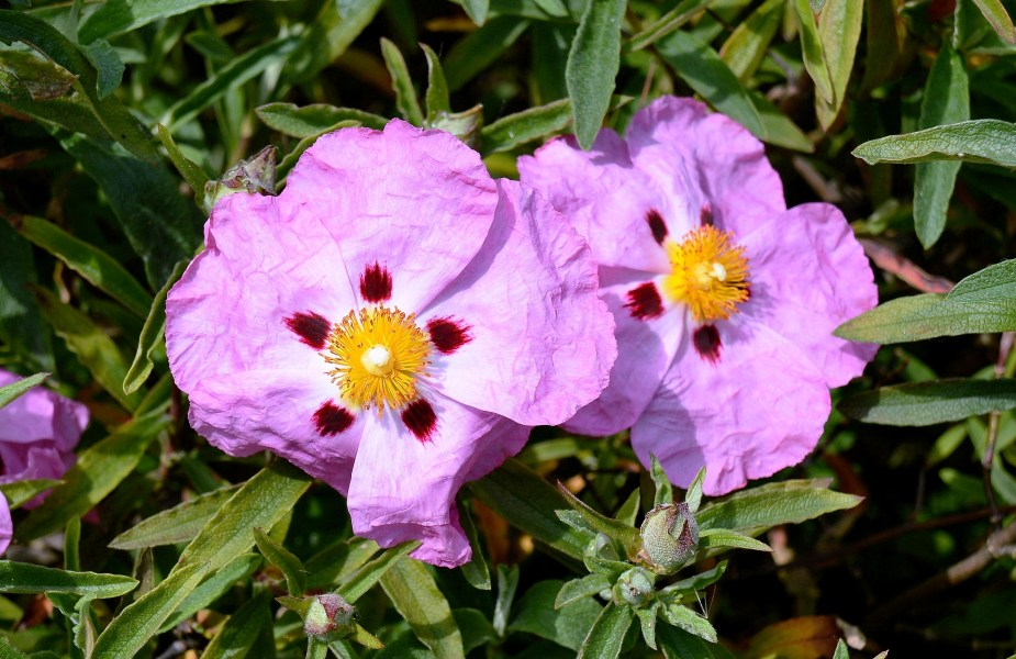 Clissold Park Wisteria Unknown Flower