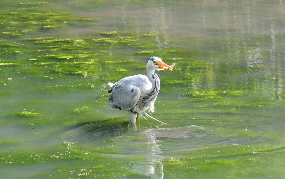 Crystal Palace Park Heron and Fish