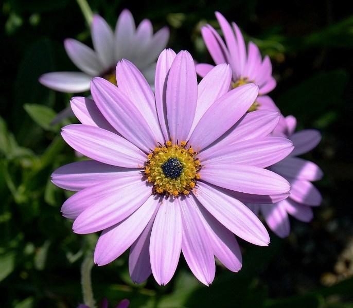Dulwich Park Flower DSC_4110