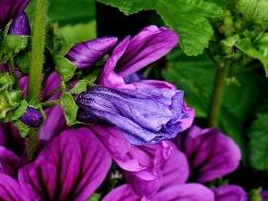 Unknown Flower-3