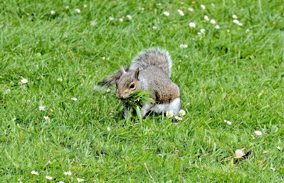 York House Gardens Squirrel