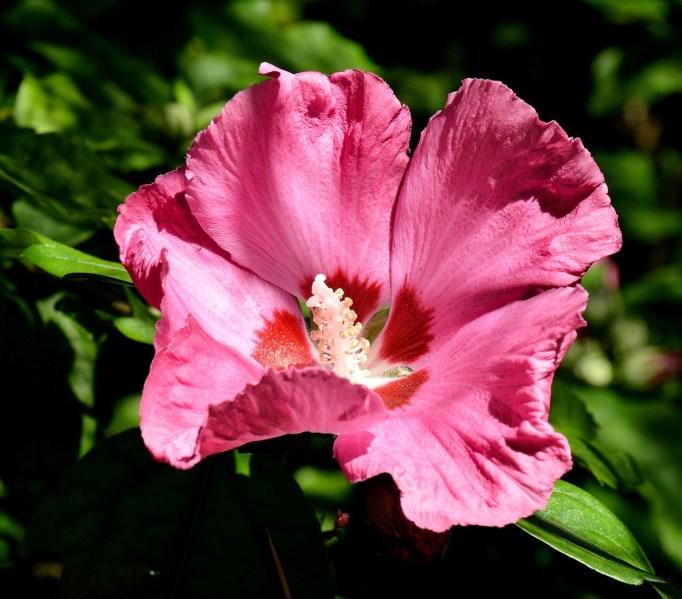 Chelsea Physic Garden Flower DSC_6696