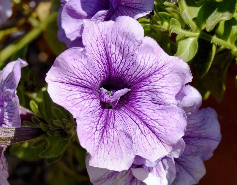 Chelsea Physic Garden Flowers DSC_6615