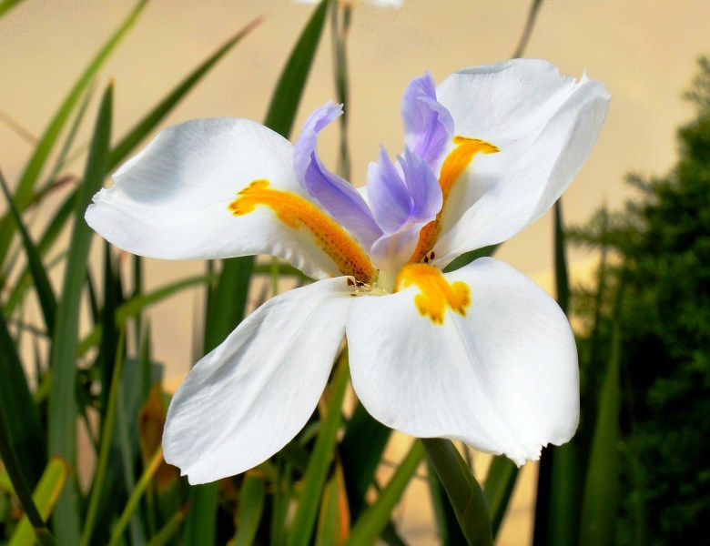 Farmopolis Flowers DSC_6477