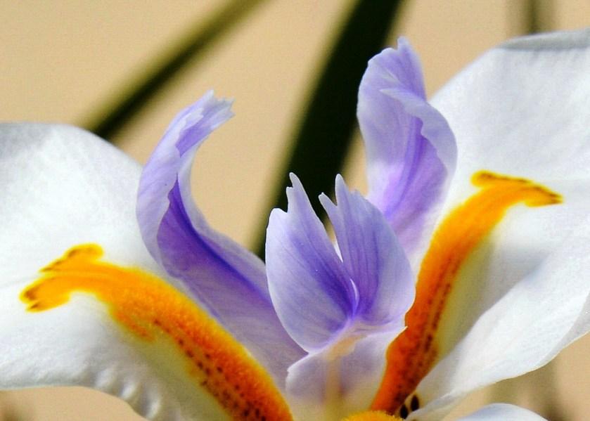 Farmopolis Flowers DSC_6478
