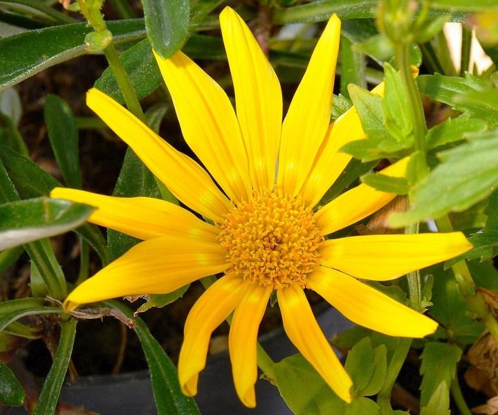 Farmopolis Flowers DSC_6486