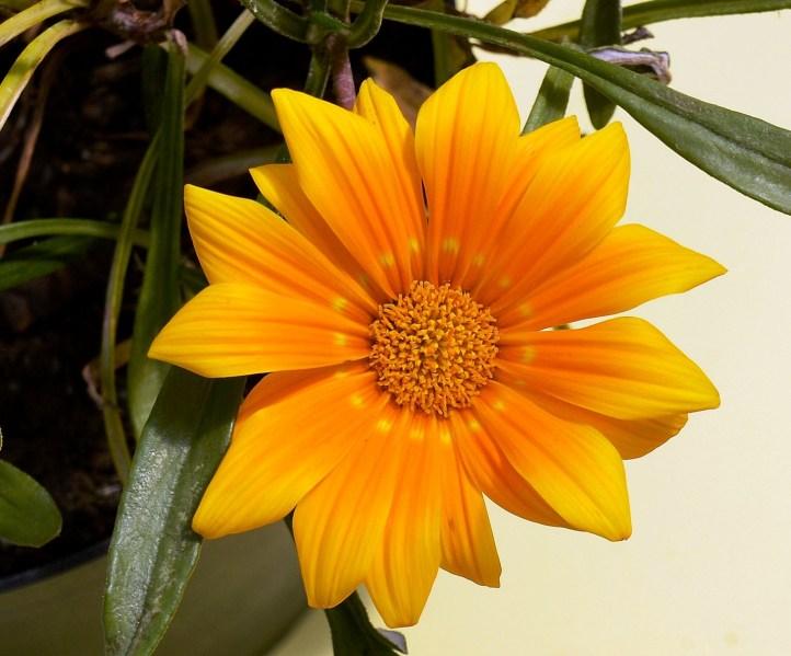 Farmopolis Flowers DSC_6487