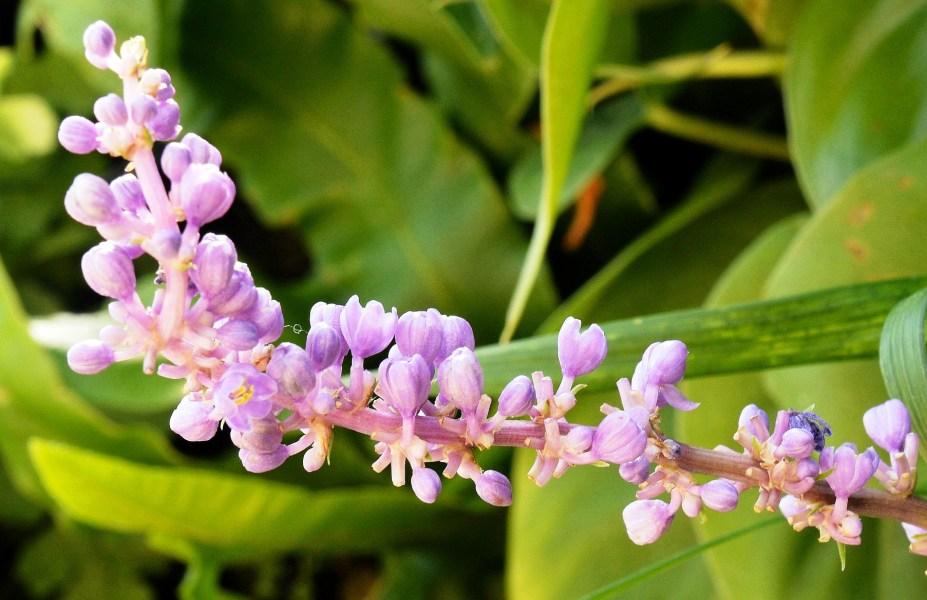 Farmopolis Flowers DSC_6495