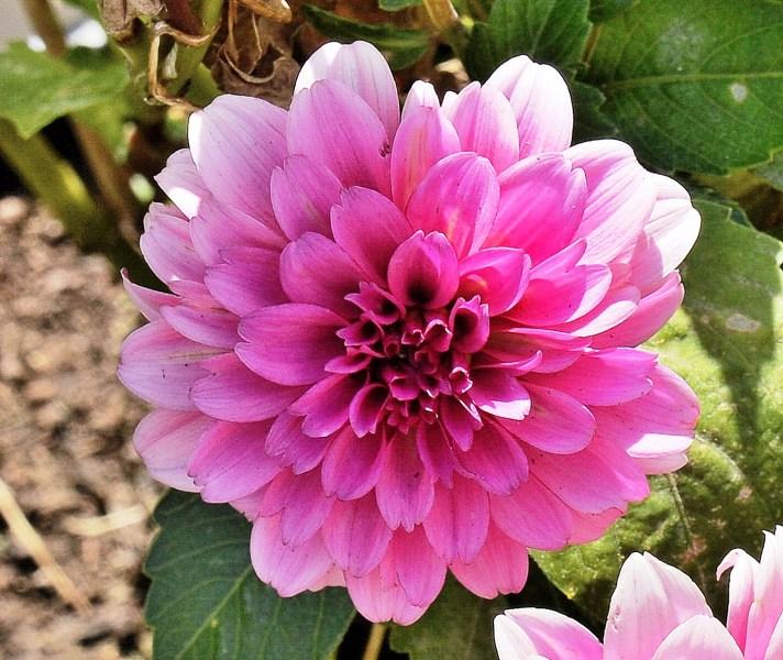 Farmopolis Flowers DSC_6500
