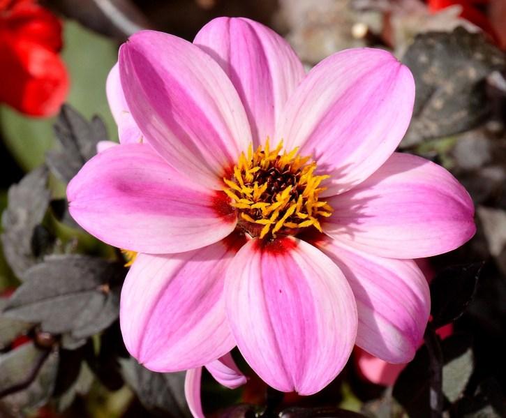 Farmopolis Flowers DSC_6507