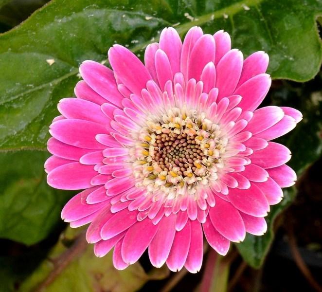 Farmopolis Flowers DSC_6516
