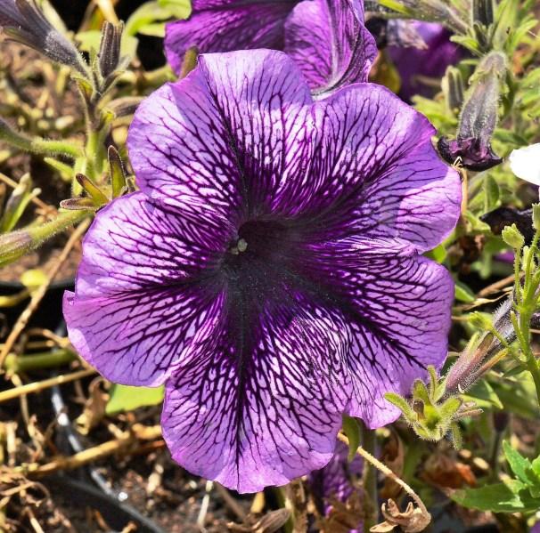 Farmopolis Flowersd DSC_6456