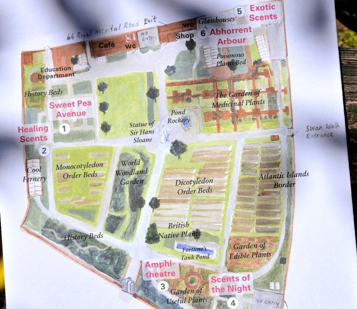 Map of Chelsea Physic Garden | Freed From Time