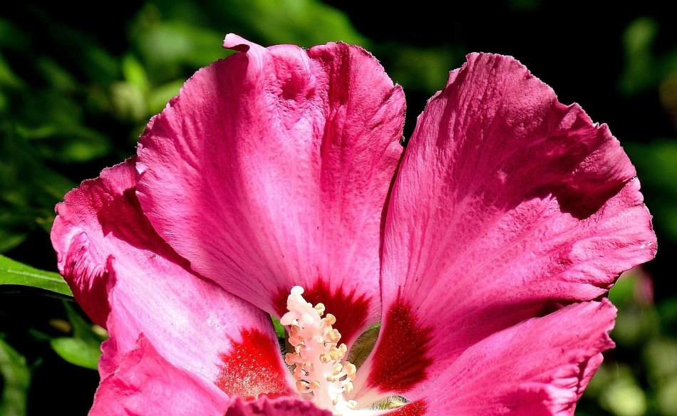 chelsea-physic-garden-dsc_6696