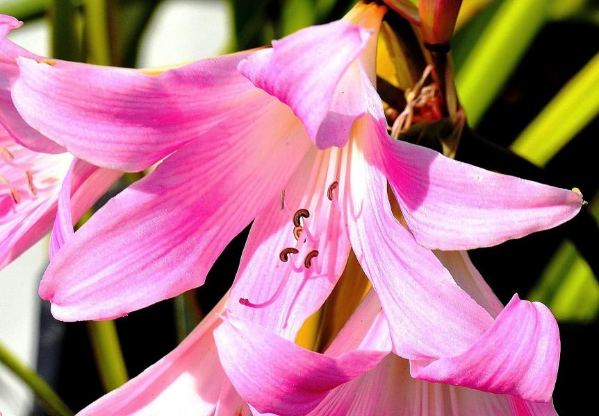 wisley-flowers-dsc_0186