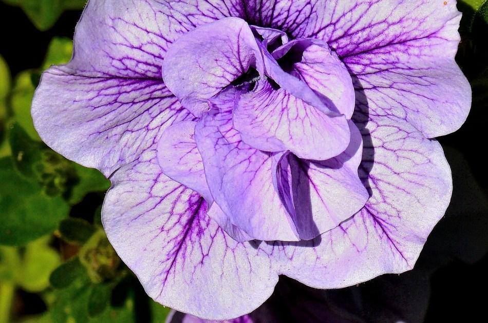 brighten-the-day-chelsea-physic-garden-flowers-dsc_6622