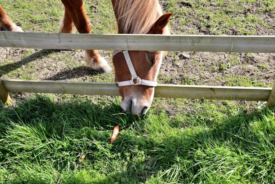 mudchute city farm horses